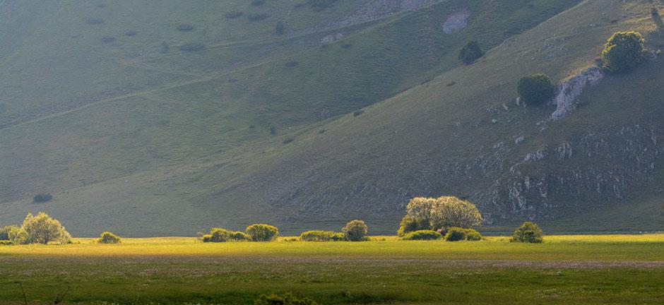 Les Ophrys tardifs d'Italie du sud - Page 2 Jlr_1030