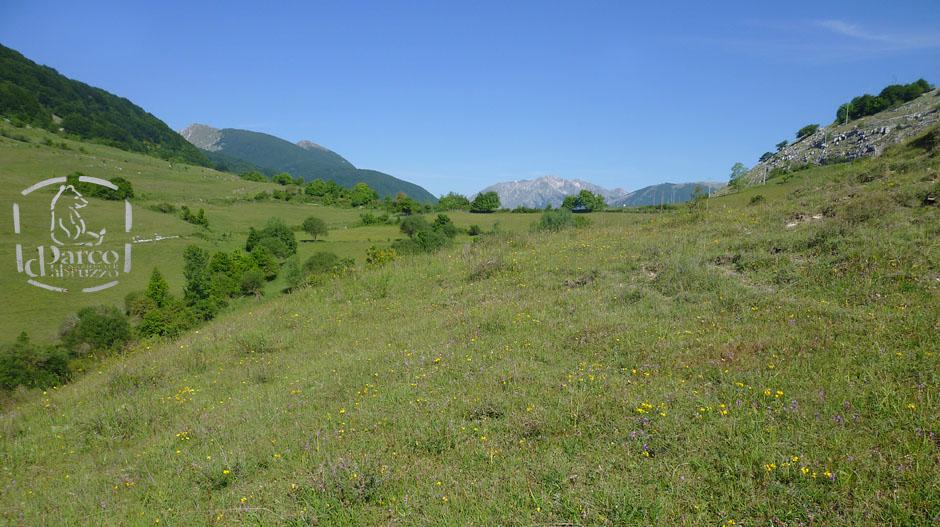 Les Ophrys tardifs d'Italie du sud - Page 2 P1180512