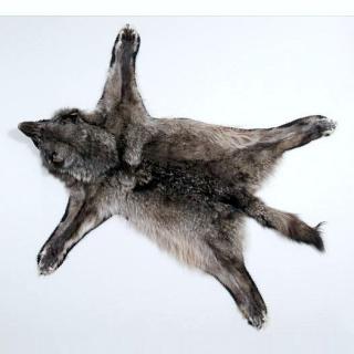 Cavalier celte- Pegaso- Terminé enfin Wolf_010