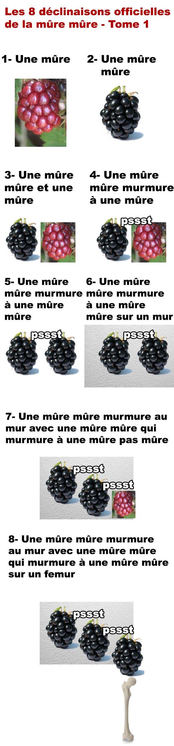 Image du jour - Page 6 Muuuur10