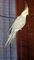 nom des oiseaux et photos 2015-013
