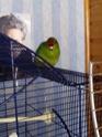 nom des oiseaux et photos 2015-016