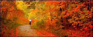 Les Chroniques Royales N°5 Autumn10
