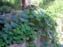 La planète? C'est tout de suite! ou : Le jardinier éthique. - Page 2 Capuci11