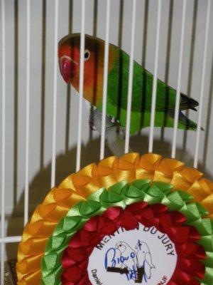 oiseaux de concour 26715012