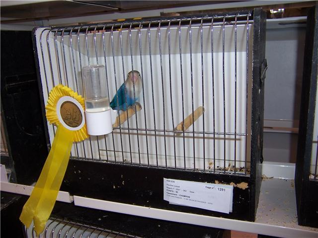 oiseaux de concour Getatt11