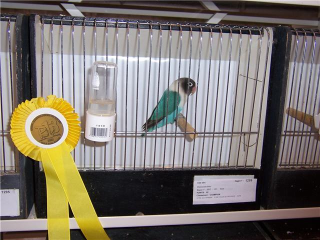 oiseaux de concour Getatt12