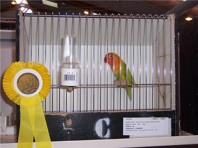 oiseaux de concour Getatt13