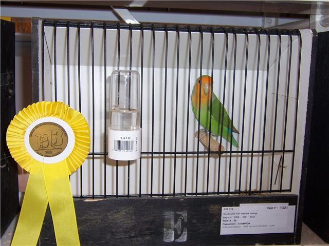 oiseaux de concour Getatt14