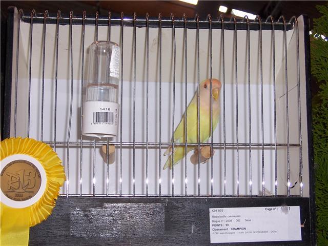 oiseaux de concour Getatt15