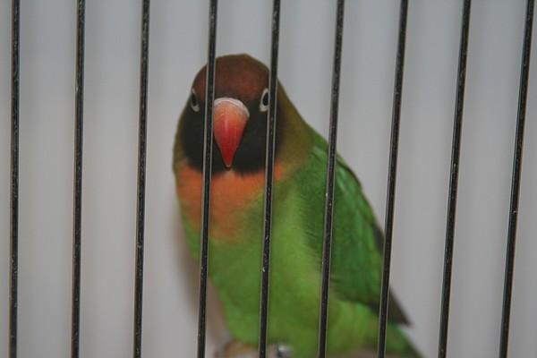 oiseaux de concour Img_1811