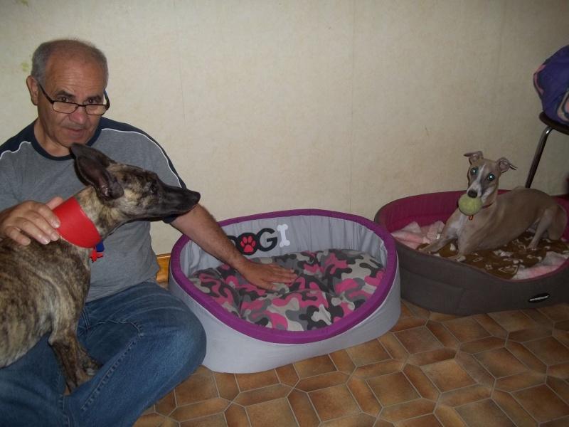 Lucky whippet de 7 mois à l'adoption Adopté Lucky_10