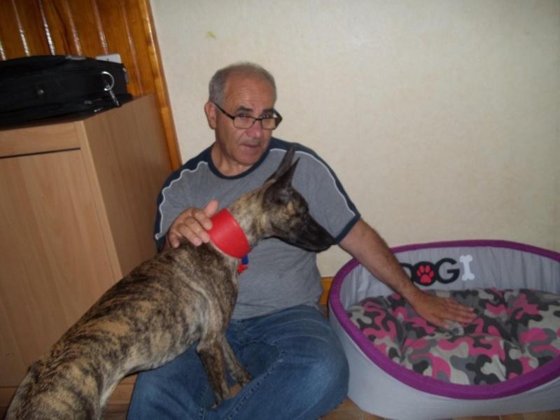 Lucky whippet de 7 mois à l'adoption Adopté Lucky_11