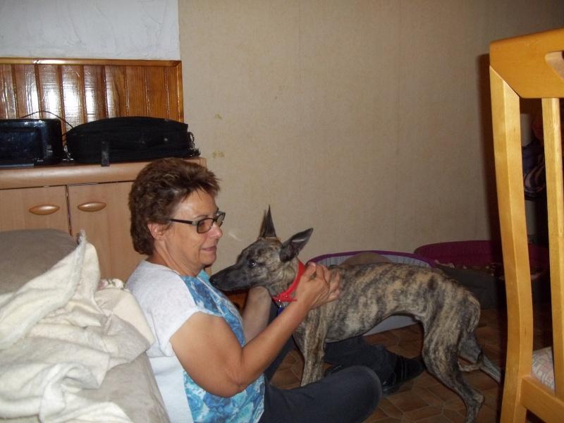 Lucky whippet de 7 mois à l'adoption Adopté Lucky_12