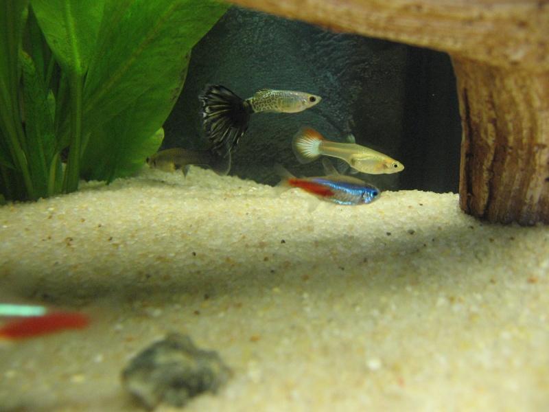 Mon aquarium en cours de création. Poisso10