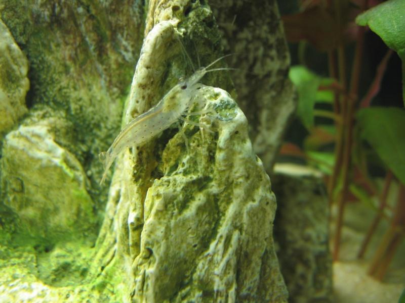 Mon aquarium en cours de création. Poisso11