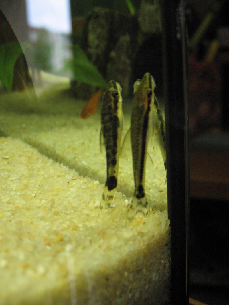 Mon aquarium en cours de création. Poisso12
