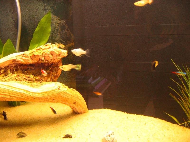 Mon aquarium en cours de création. Poisso14