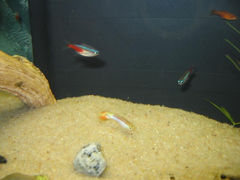 Mon aquarium en cours de création. Poisso15