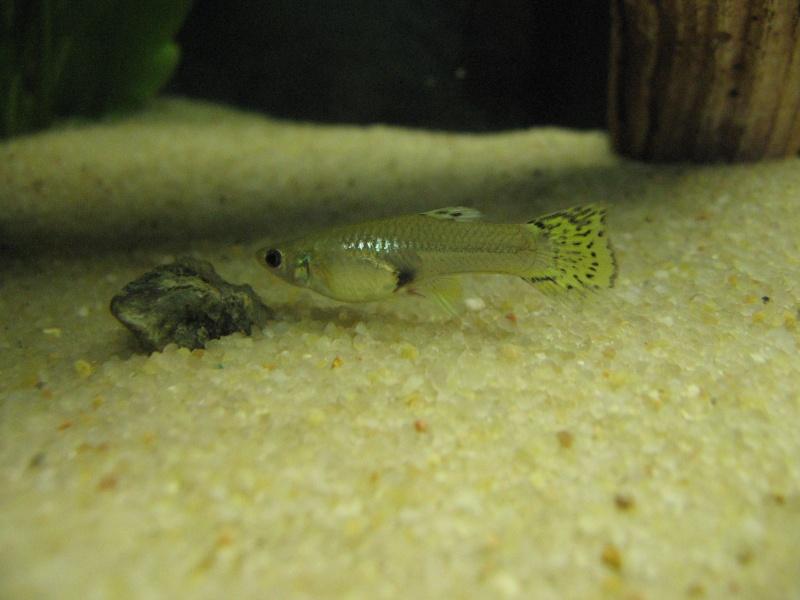 Mon aquarium en cours de création. Poisso17