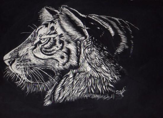 dessin sur carte à gratter Tigre010