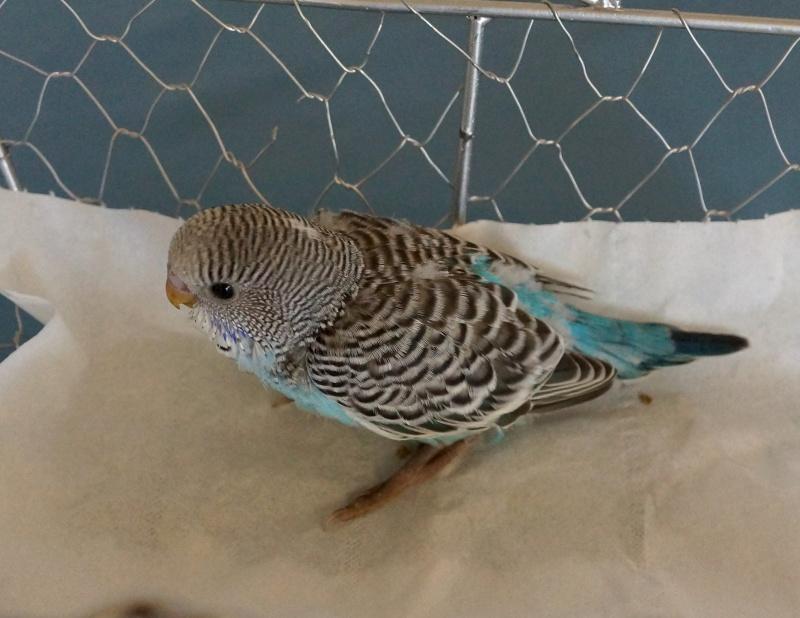 Le plumage des bébés apparait 2yme_p10