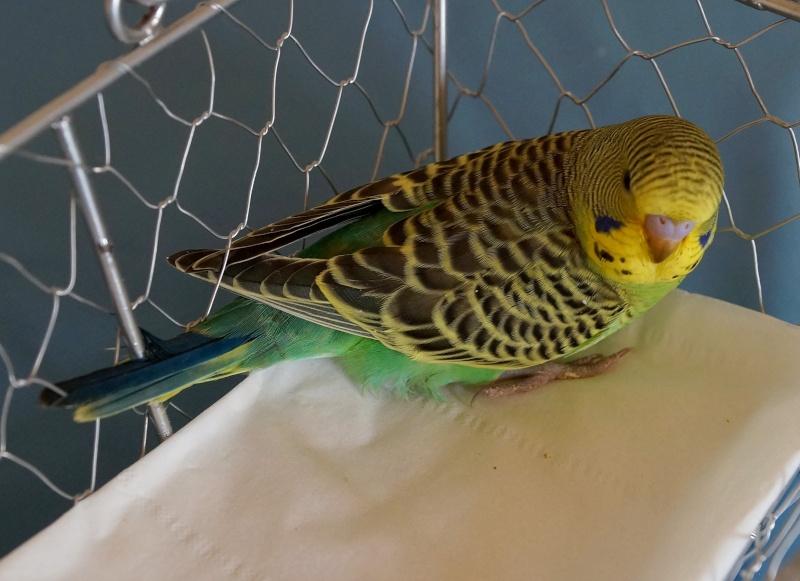 Le plumage des bébés apparait Byby_511