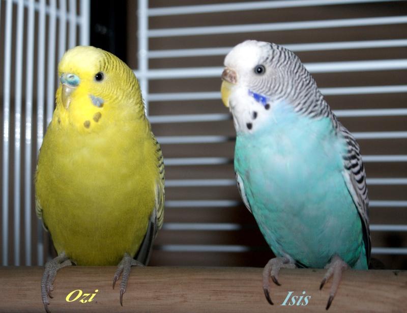 Le plumage des bébés apparait Ozi_is11