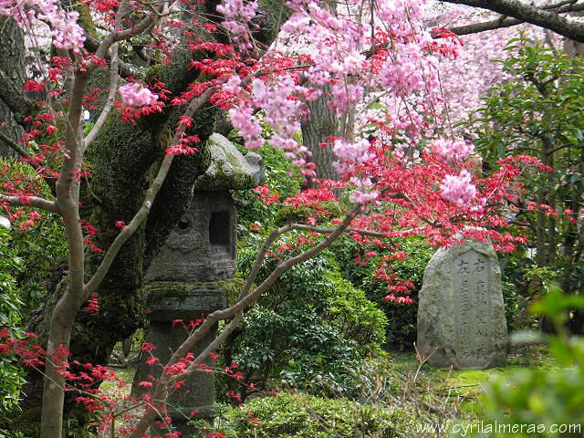Paysages Japonais Img_1610