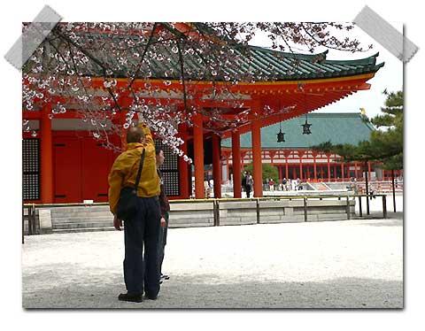 Paysages Japonais Sakura10
