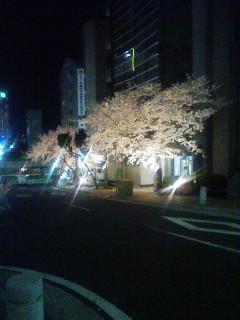 pour toi Sakura 07040610