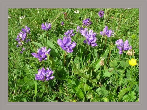 [Italie] Randos botaniques dans les Dolomites Campan11