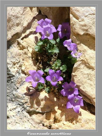 [Italie] Randos Dolomites(suite) Campan12