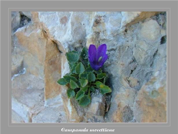 [Italie] Randos Dolomites(suite) Campan13