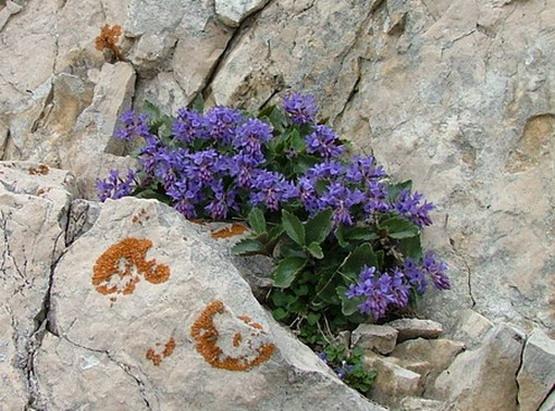 [Italie] Balades au Monte Baldo Dscf5910