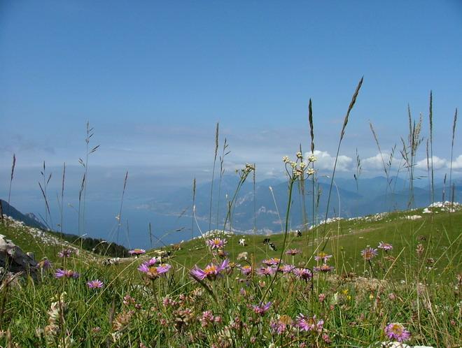 [Italie] Balades au Monte Baldo Dscf6112