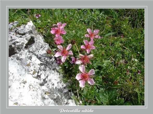 [Italie] Randos Dolomites(suite) Potent11