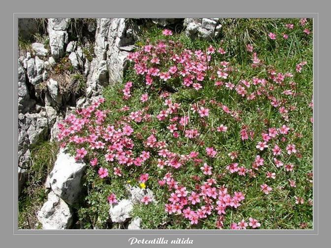 [Italie] Randos Dolomites(suite) Potent12