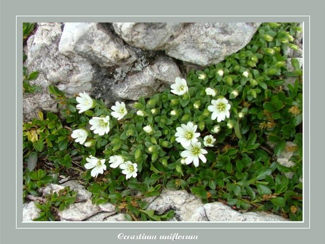 [Italie] Randos botaniques dans Dolomites (suite 2) Projet10