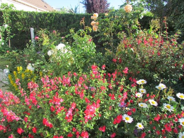 Mon jardin et ses fleurs 2015 310