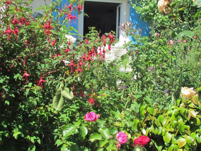 Mon jardin et ses fleurs 2015 510