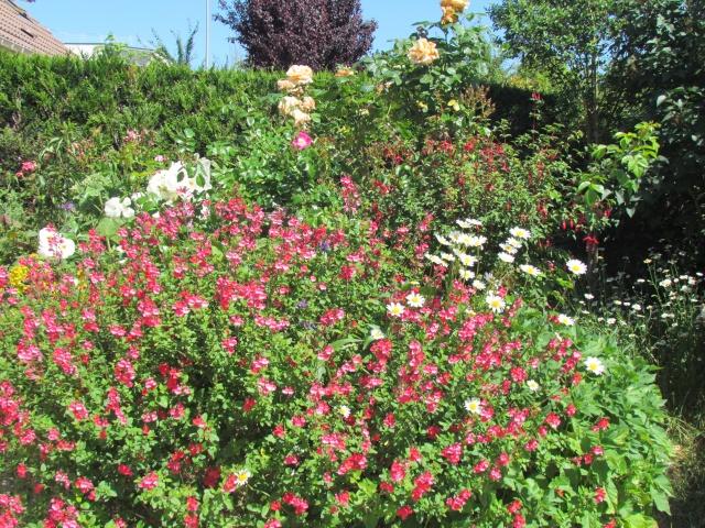 Mon jardin et ses fleurs 2015 Img_0021