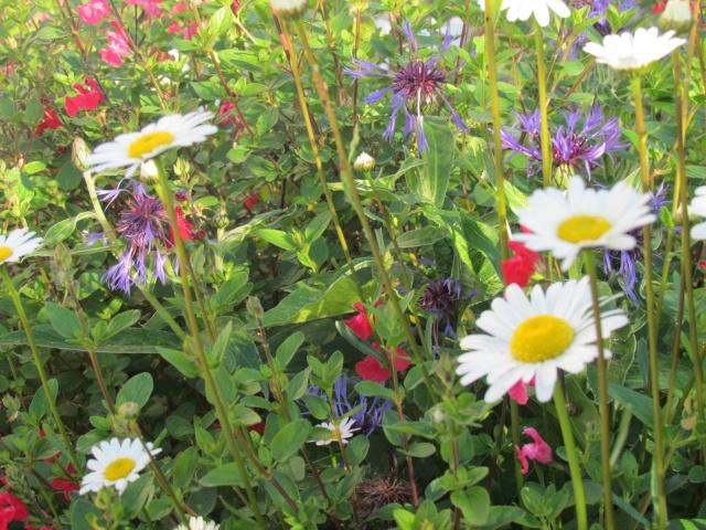 Mon jardin et ses fleurs 2015 Img_0025