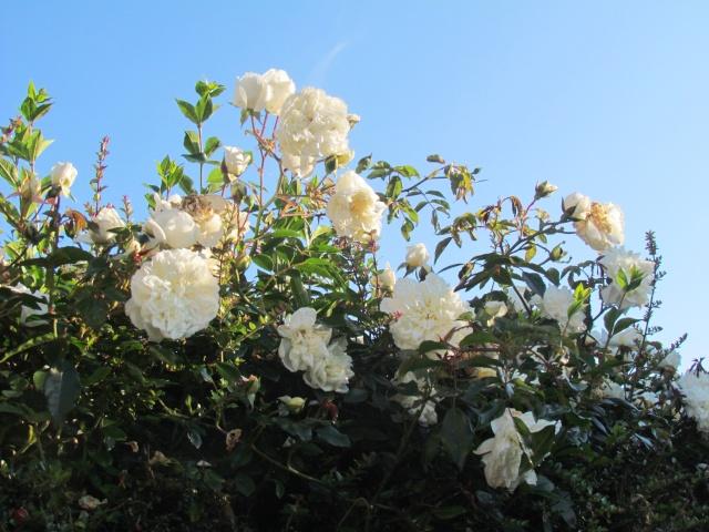 Mon jardin et ses fleurs 2015 Mon_ja11