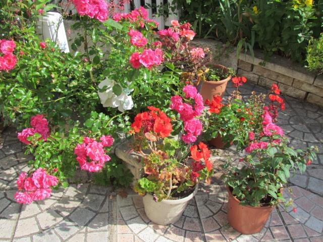 Mon jardin et ses fleurs 2015 Mon_ja12