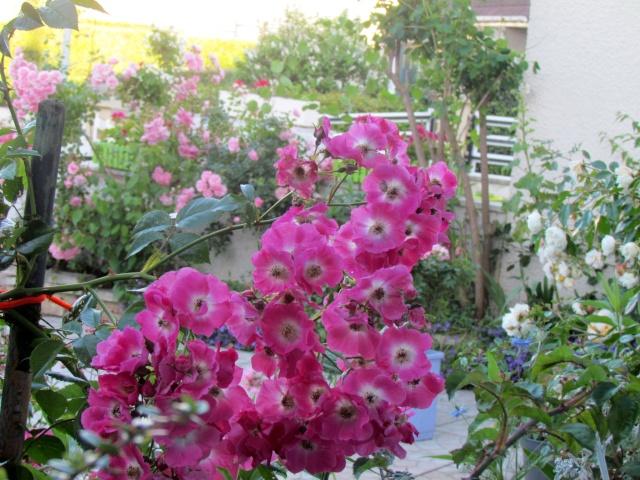 Mon jardin et ses fleurs 2015 Mon_ja16