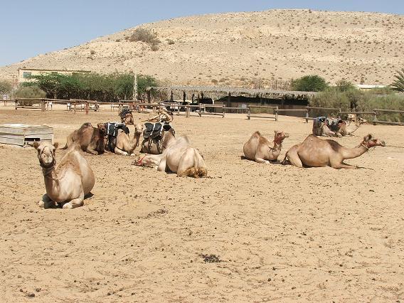 ISRAEL DU NORD AU SUD SUIVEZ-MOI Dscf2223