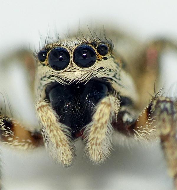 Penmarc'h 3 - Pour vous réconcilier avec les (petites) araignées... 16_06_10
