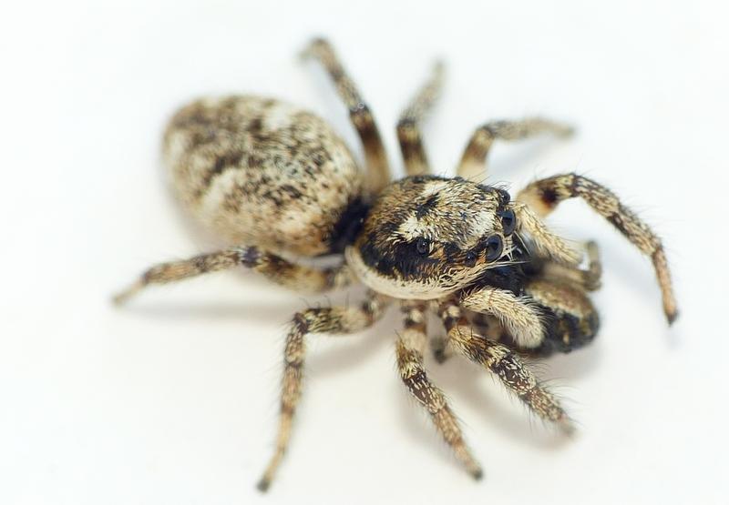 Penmarc'h 3 - Pour vous réconcilier avec les (petites) araignées... 16_06_11