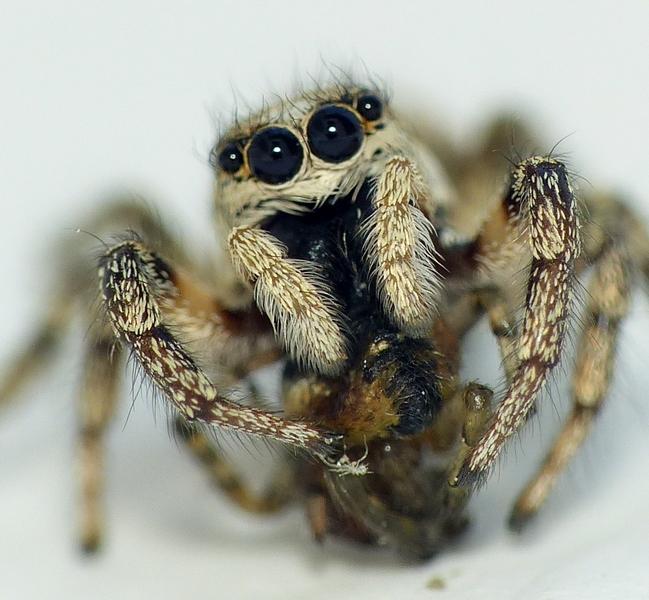 Penmarc'h 3 - Pour vous réconcilier avec les (petites) araignées... 16_06_13